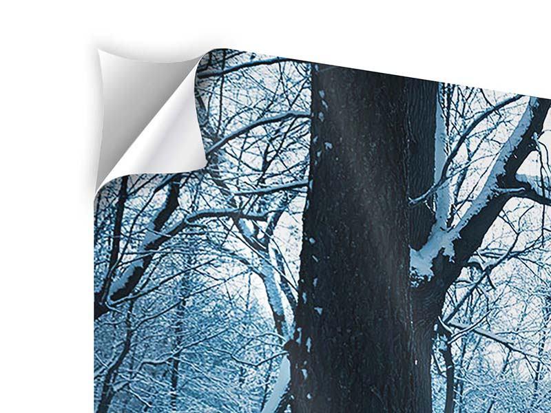 Klebeposter Panorama Der Wald ohne Spuren im Schnee