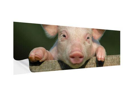 Klebeposter Panorama Schweinchen Namens Babe