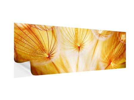 Panoramic Self-Adhesive Poster Close Up Dandelion In Light