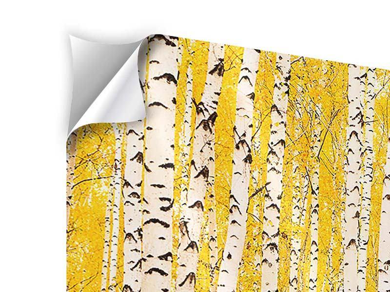 Klebeposter Panorama Der Birkenwald im Herbst