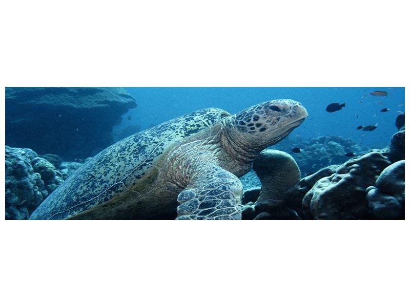 Klebeposter Panorama Die Meeresschildkröte