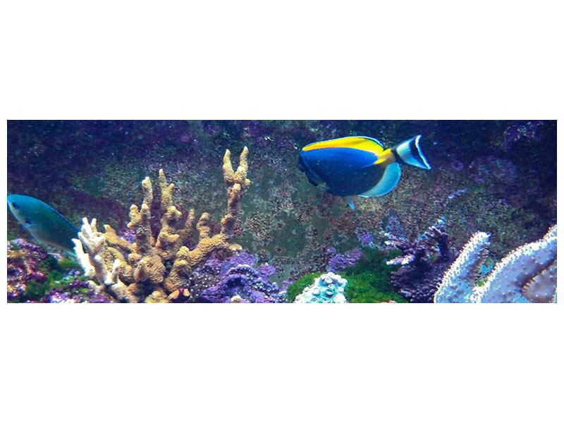 Klebeposter Panorama Fische