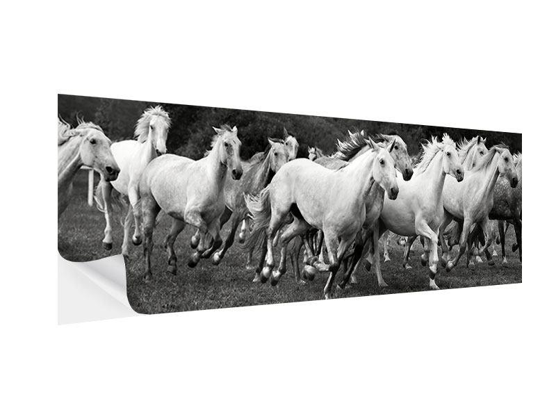 Klebeposter Panorama Die Mustang Herde