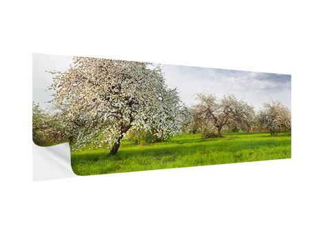 Klebeposter Panorama Apfelbaum-Garten