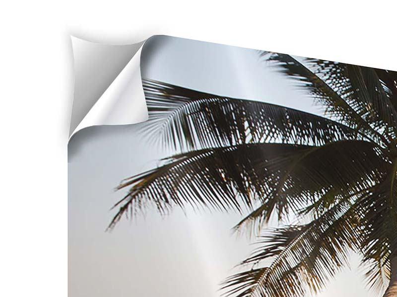Klebeposter Panorama Palme