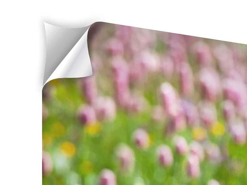 Klebeposter Panorama Der Wiesenklee