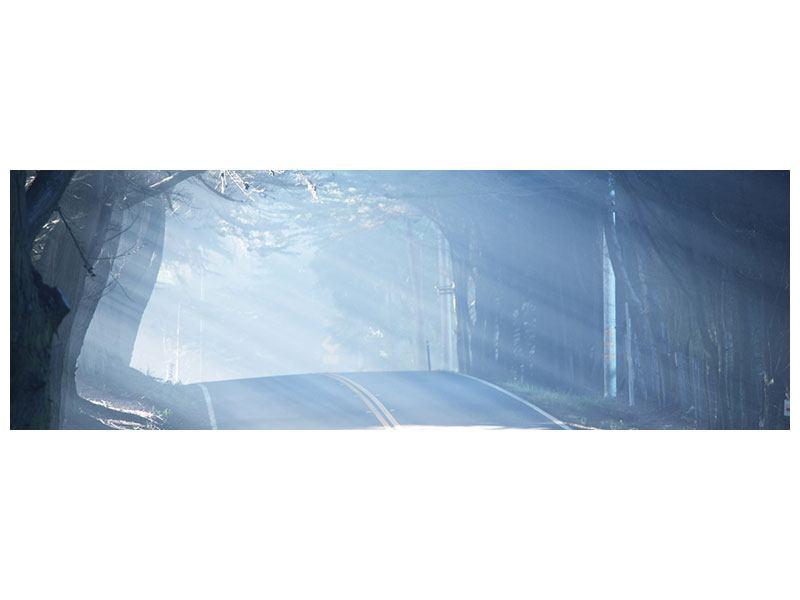 Klebeposter Panorama Lichtdurchflutete Baumallee