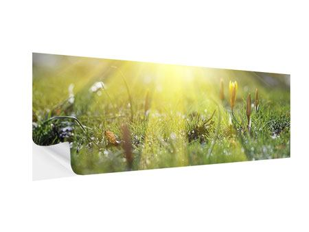 Klebeposter Panorama Blumige Wiese