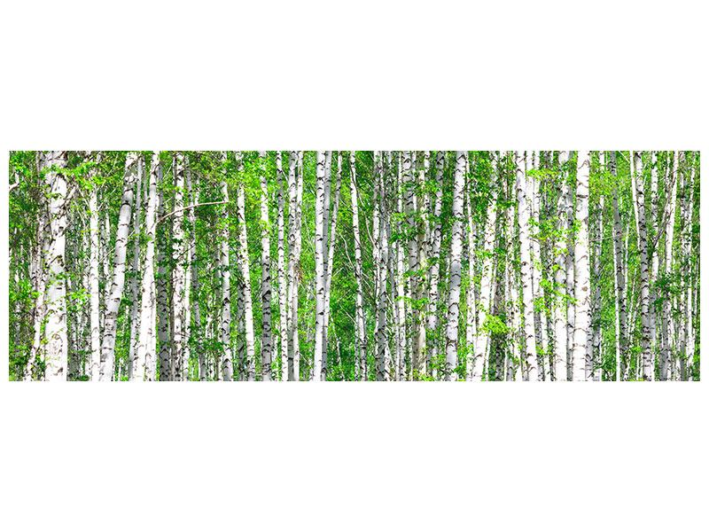 Klebeposter Panorama Der Birkenwald