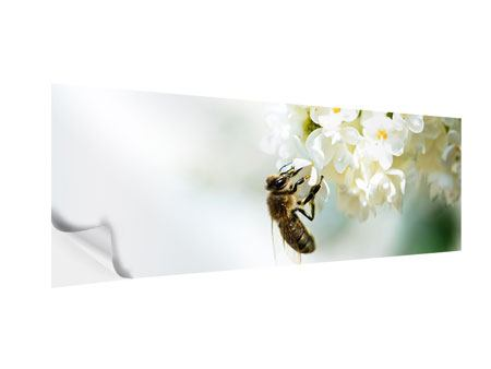 Klebeposter Panorama Die Hummel und die Blüte