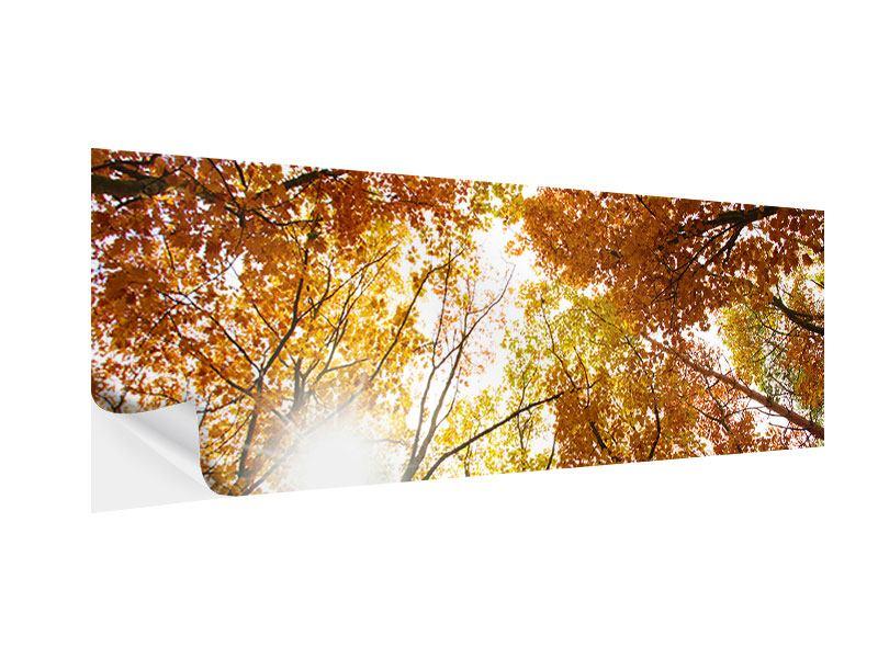 Klebeposter Panorama Herbstbäume