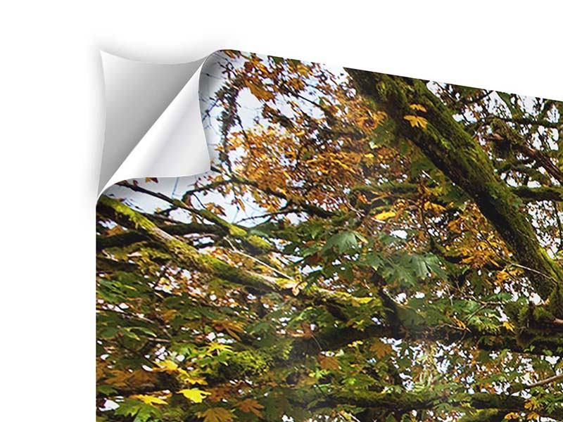 Klebeposter Panorama Mein Lieblingsbaum