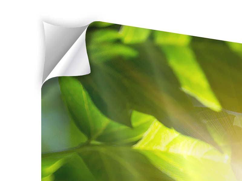 Klebeposter Panorama Es grünt so grün