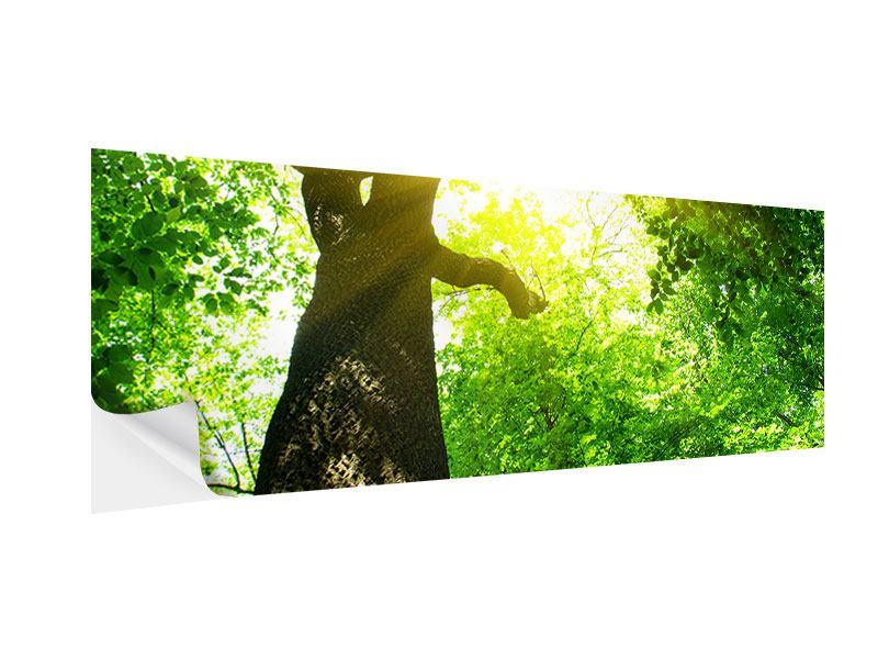 Klebeposter Panorama Baum