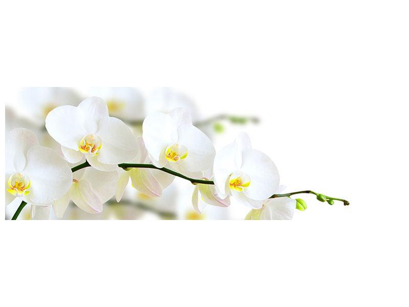 Klebeposter Panorama Weisse Orchideen