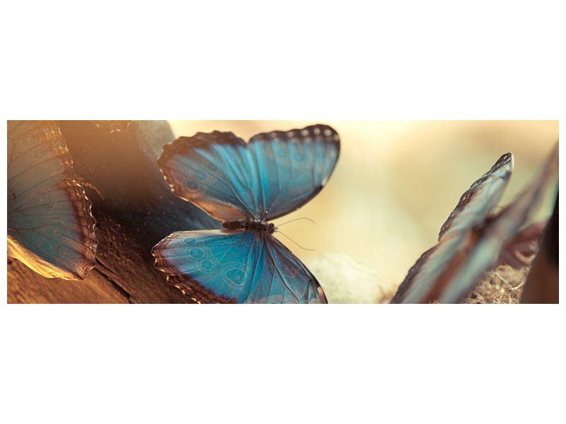 Klebeposter Panorama Schmetterlinge