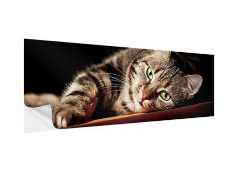 Klebeposter Panorama Entspannte Katze