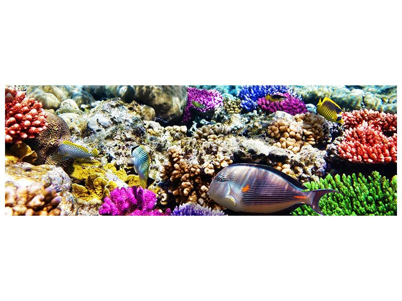 Klebeposter Panorama Fischaquarium
