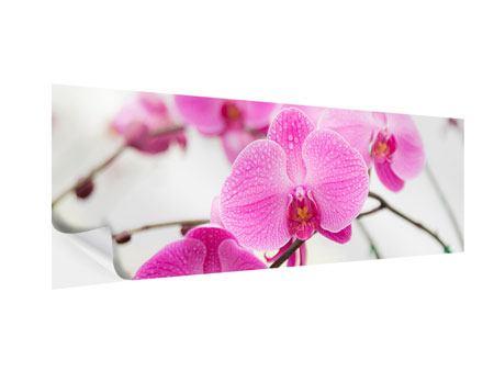 Klebeposter Panorama Das Symbol der Orchidee