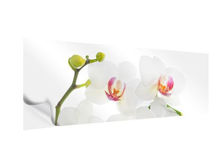Klebeposter Panorama Orchideenliebe