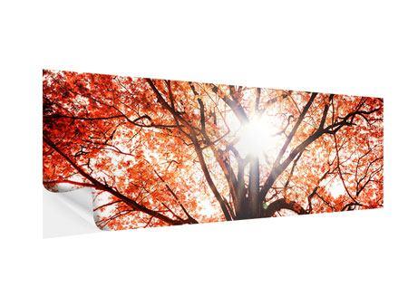 Klebeposter Panorama Herbstlicht