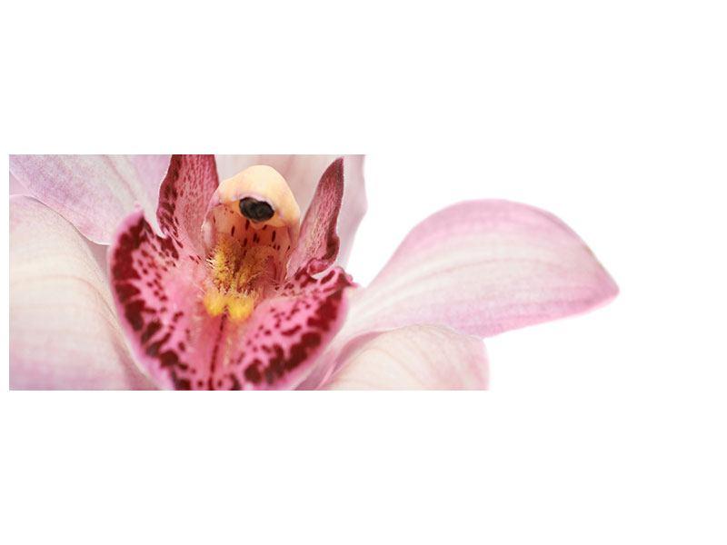 Klebeposter Panorama Orchideenblüte XXL