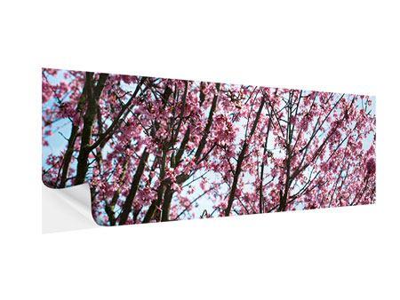 Klebeposter Panorama Japanische Blütenkirsche