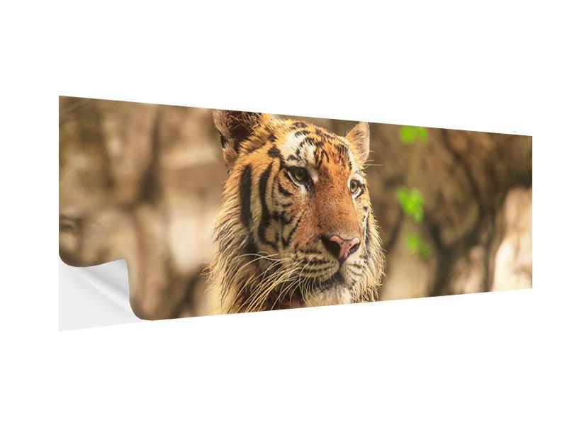 Klebeposter Panorama Tiger