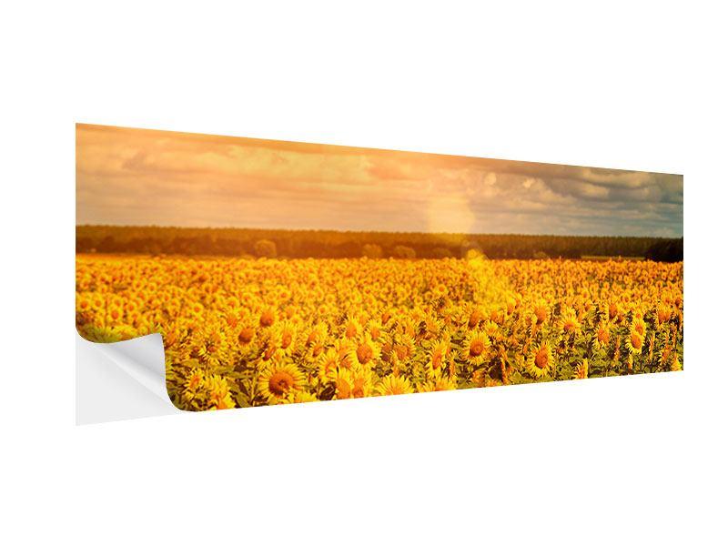 Klebeposter Panorama Goldenes Licht für Sonnenblumen