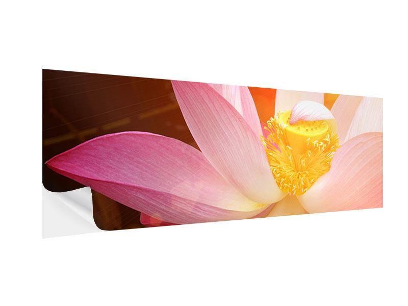 Klebeposter Panorama Close Up Lotus