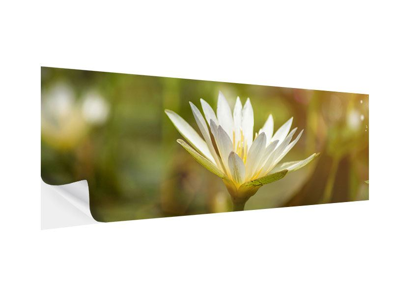 Klebeposter Panorama Lilien-Lichtspiel