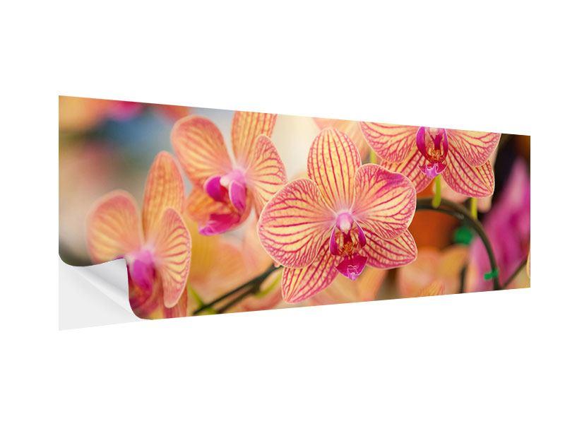 Klebeposter Panorama Exotische Orchideen