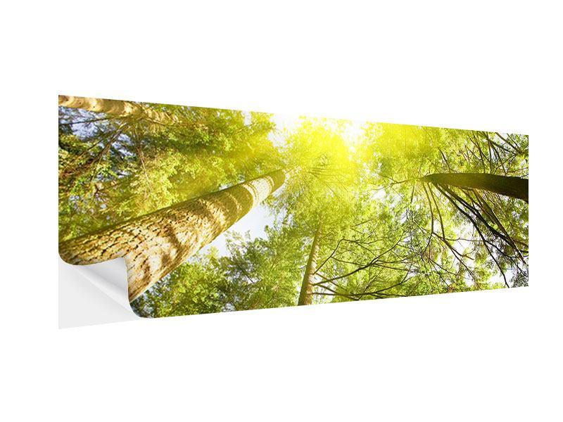 Klebeposter Panorama Baumkronen in der Sonne