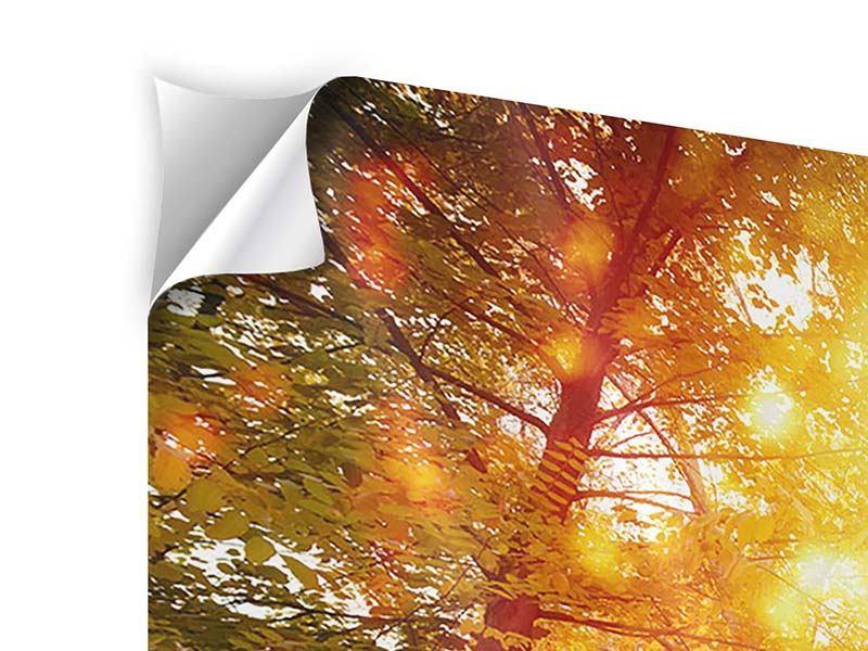 Klebeposter Panorama Vollblut im Herbstwald
