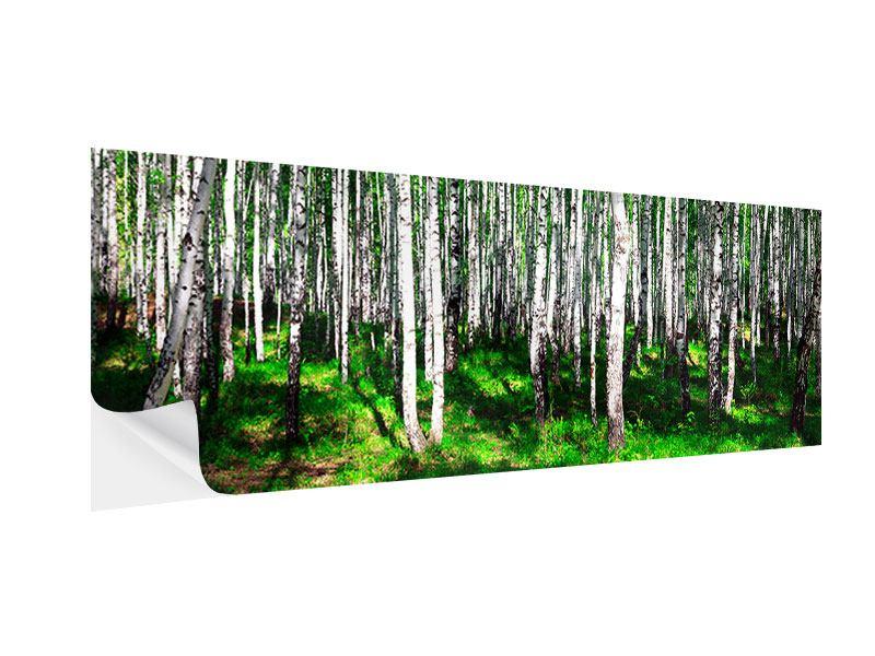 Klebeposter Panorama Sommerlicher Birkenwald