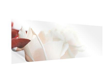 Klebeposter Panorama Herrliche Rosen