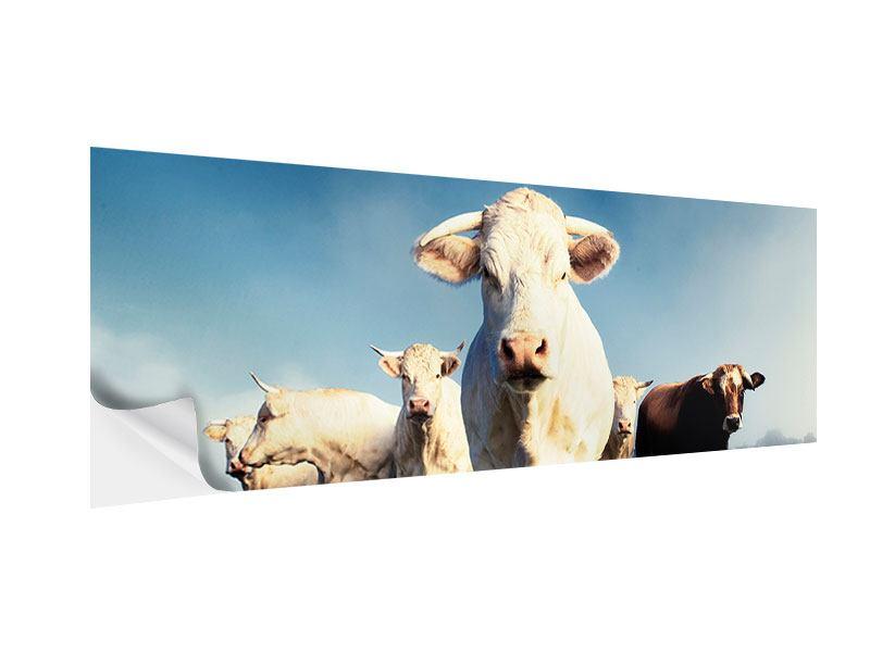 Klebeposter Panorama Kühe