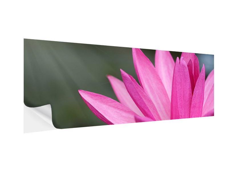Klebeposter Panorama XXL Seerose in Pink