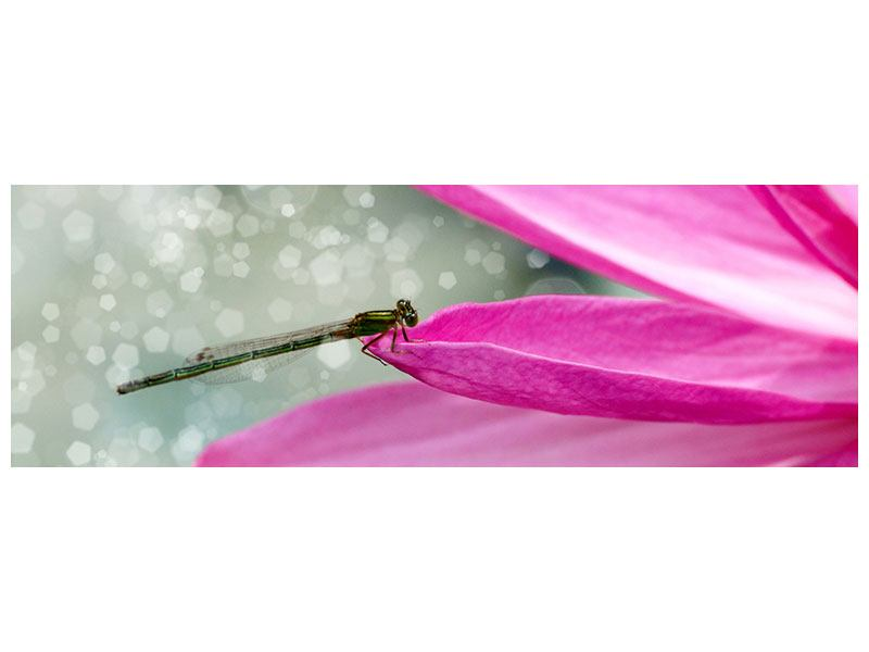 Klebeposter Panorama Libelle auf dem Seerosenblatt