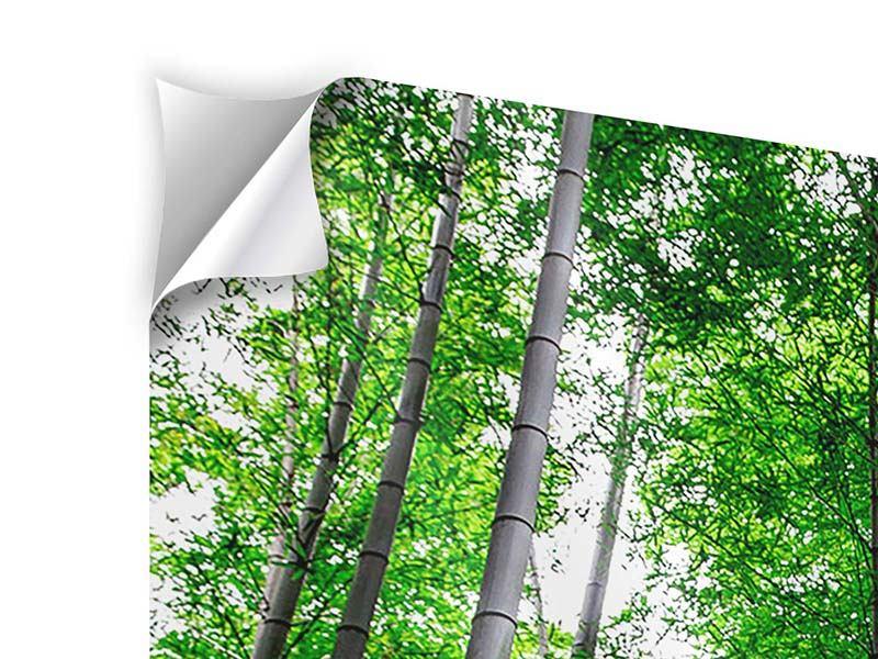 Klebeposter Panorama Bambuswald
