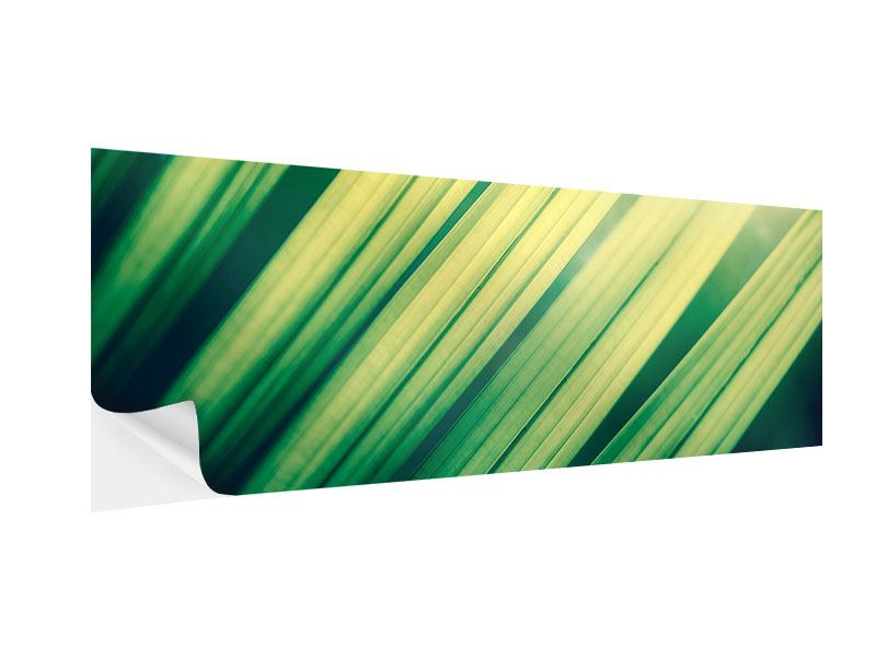 Klebeposter Panorama Beleuchtetes Palmblatt