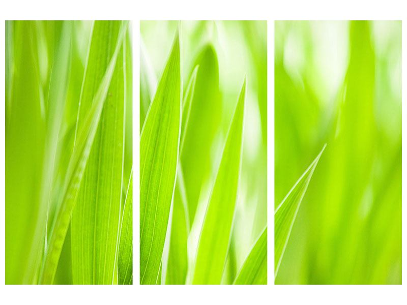 Klebeposter 3-teilig Gras XXL