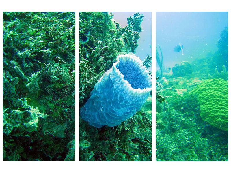 Klebeposter 3-teilig Korallen
