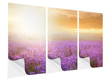 Klebeposter 3-teilig Sonnenuntergang beim Lavendelfeld