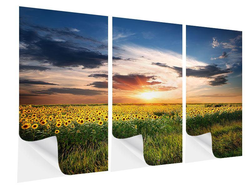 Klebeposter 3-teilig Ein Feld von Sonnenblumen