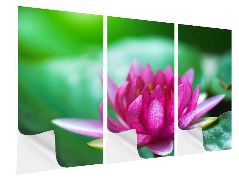 Klebeposter 3-teilig Lotus in Pink