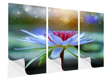 3 Piece Self-Adhesive Poster Pretty Lotus