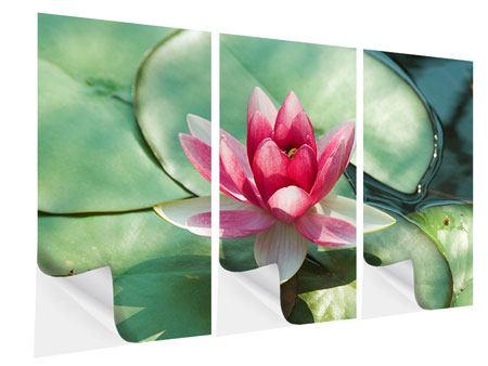 Klebeposter 3-teilig Der Frosch und das Lotusblatt