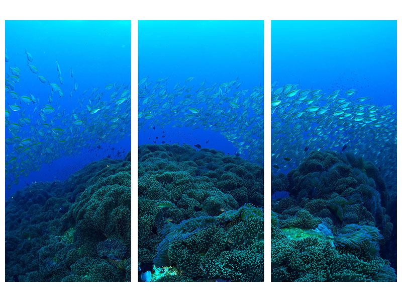 Klebeposter 3-teilig Fischschwärme