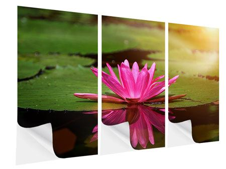 Klebeposter 3-teilig Lotus im Wasser